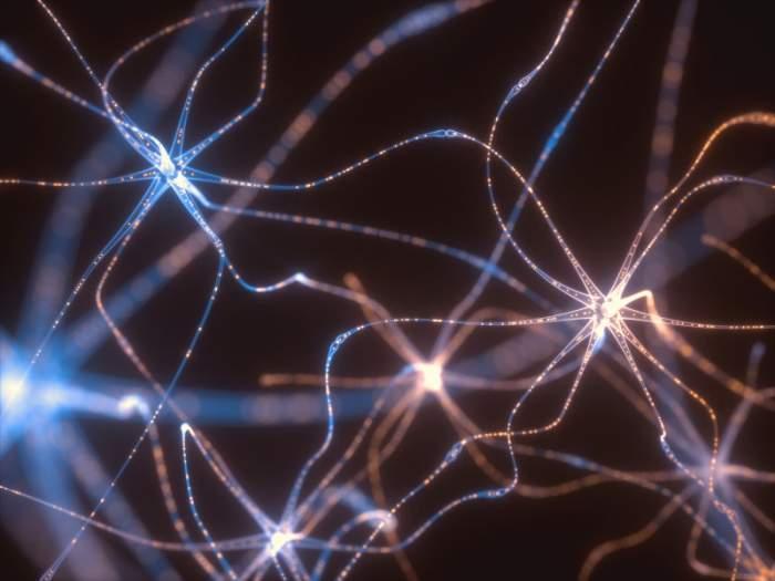 Neuogenesis