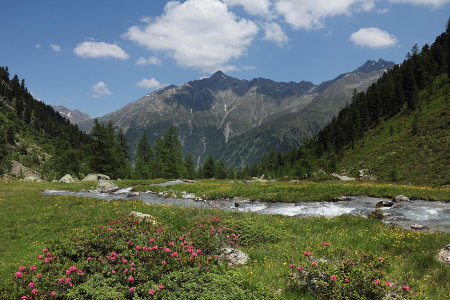 Alpen im Frühjahr ist, wo jede Wanderung einer Rebirth-Erfahrung gleicht