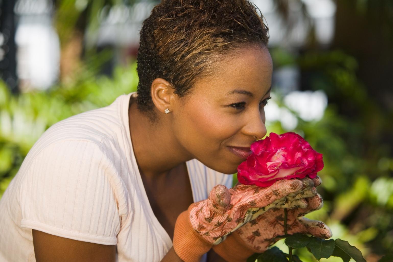 Schnuppern erlaubt, pflücken nicht: die Rosen im Nürnberger Burggarten.