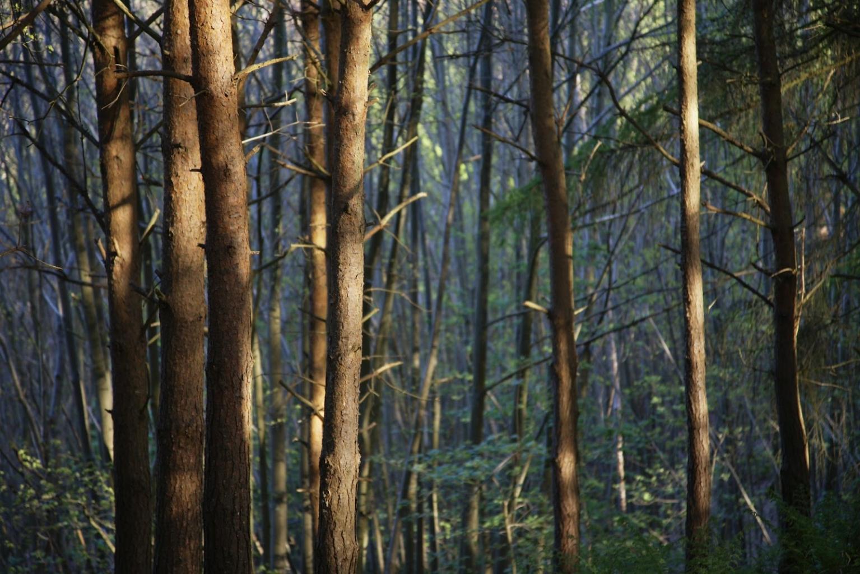 Licht und Schatten – unheimliche Wirkungen des transsylvanischen Waldes.