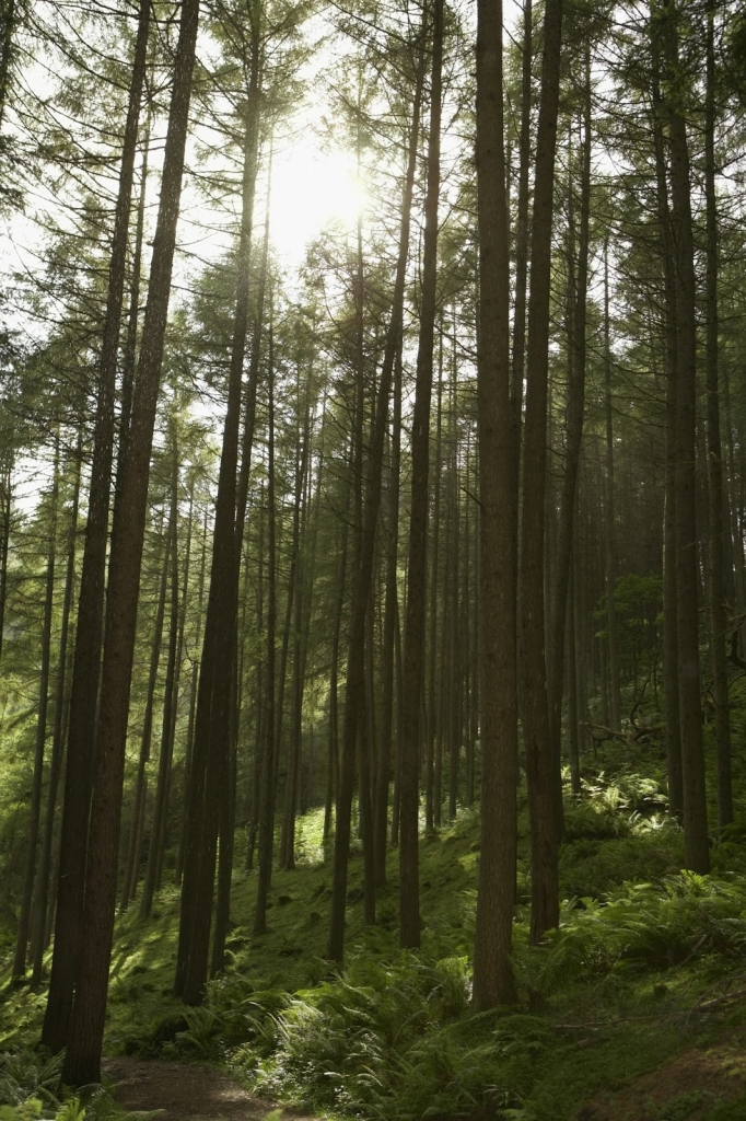 Wälder sind oft dunkel und gruselig